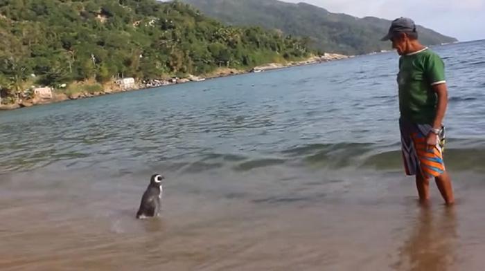 man-saves-penguin-returns-swims-5000-miles-21